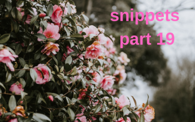 An envelope of snippets part 19